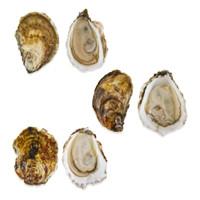 Atlantic Oyster Sampler