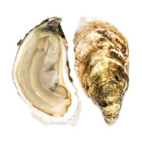 Cotuit Oysters-1