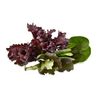 Mini Crown Lettuce Mix-1