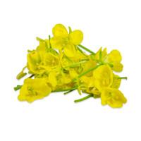 Fresh Mustard Flowers-2