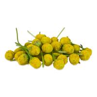 Fresh Szechuan/Buzz Buttons-2