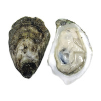 Live Virginica Oysters