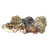 Fresh Organic Mushroom Sampler - several different kinds of brown, gray & white mushrooms